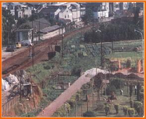 北投區第五期重劃前,土地荒廢雜草叢立之二
