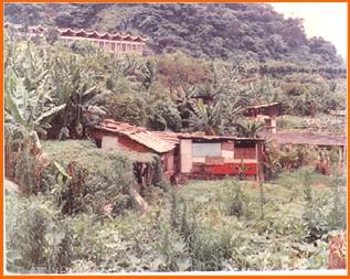 士林區第二期重劃前,種植農作物,房舍簡陋之一