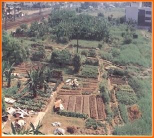 松山區第四期重劃前,種植農作物,低度利用之一
