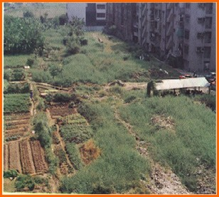 松山區第四期重劃前,種植農作物,低度利用之二