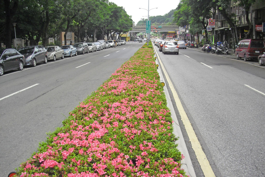 敦煌路中央分隔島以觀花性灌木杜鵑打造花園城市意象