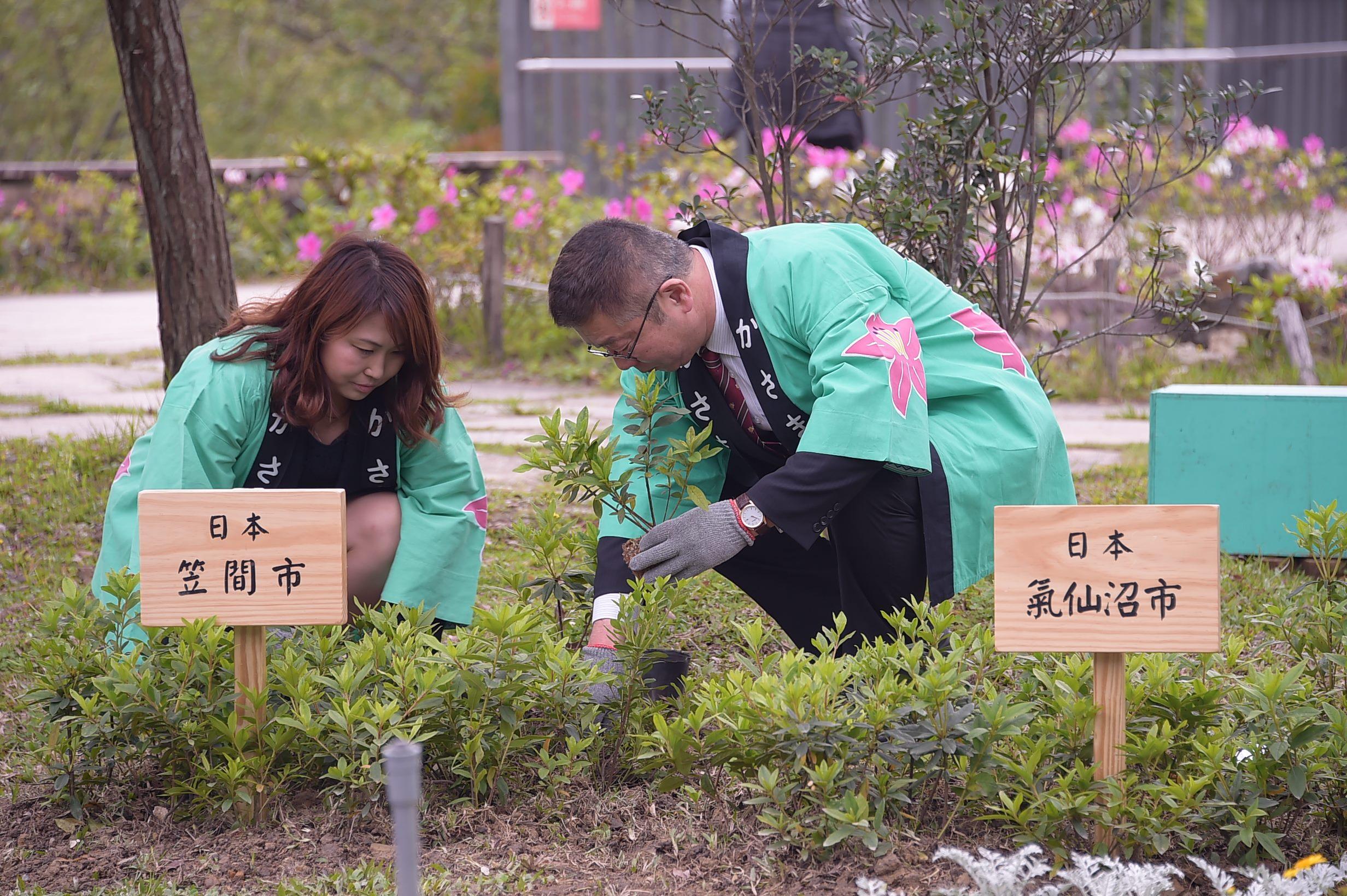 來自日本的杜鵑花城市參與臺北杜鵑花季,共同種植杜鵑花
