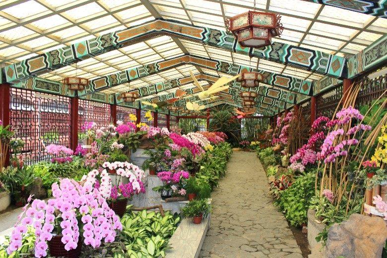 士林官邸2020春節花卉展自1月25日起展出