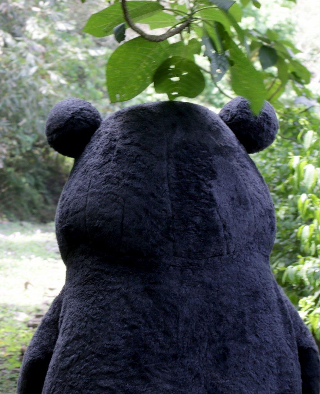 熊讚目前歸隱山林,整理心情後將重新出發