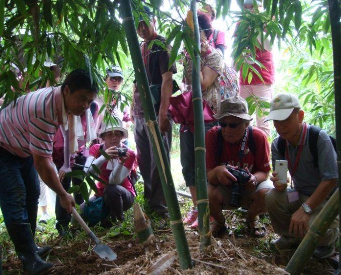 綠竹筍體驗活動