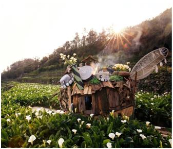 2017海芋季花卉地景