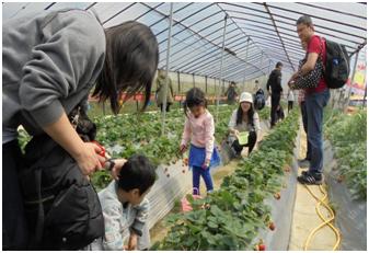 內湖草莓季觀摩活動
