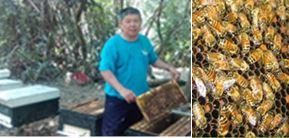 蜜蜂的習性及生長過程說明、蜂蜜農特產品展售
