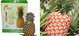 鳳梨ㄟ故鄉-「金佳蒂」優良農特產品展售會