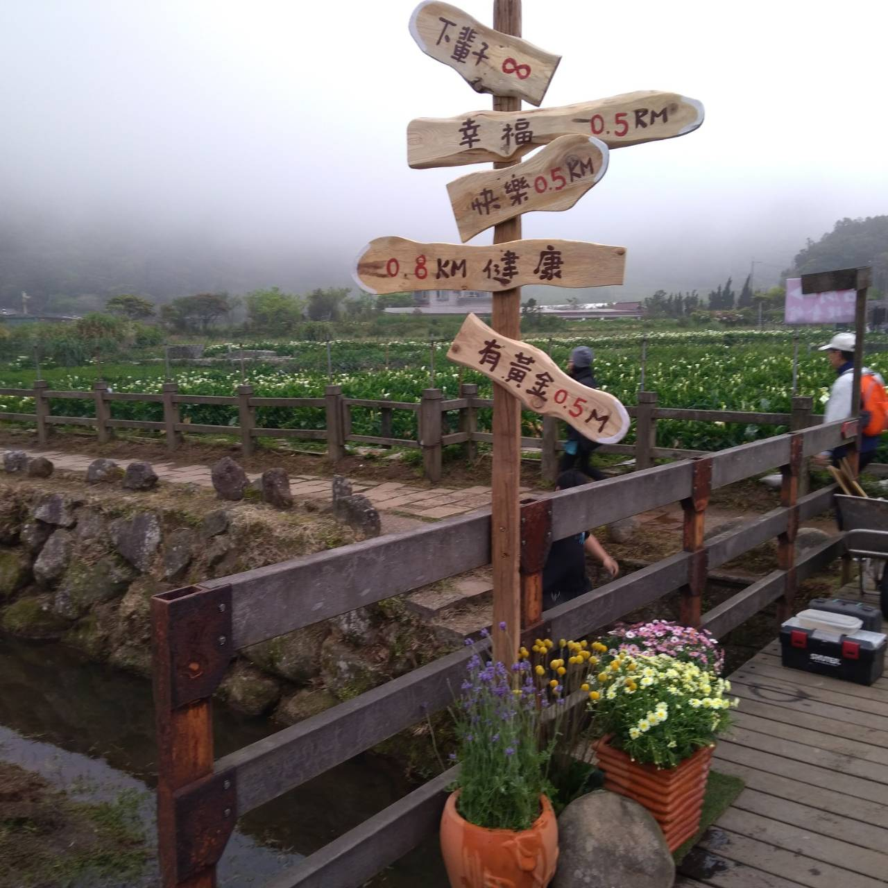 頂湖海芋步道