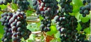 彰化縣優質吉園圃生鮮蔬果暨農產品推廣與展售會