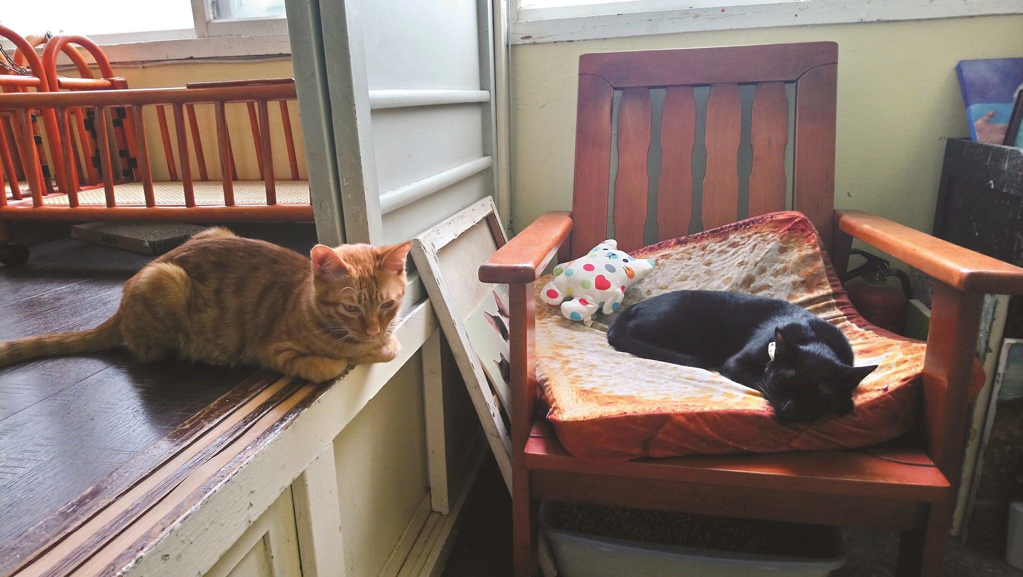 貓咪喜歡有自己的隱私空間,可以放鬆休息。