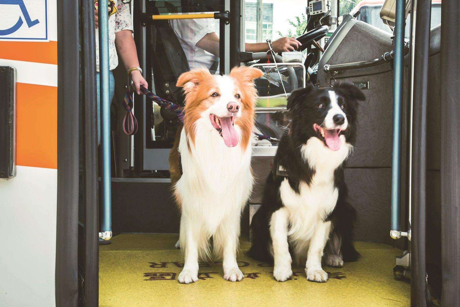 飼主帶著狗狗搭乘友善狗狗公車。