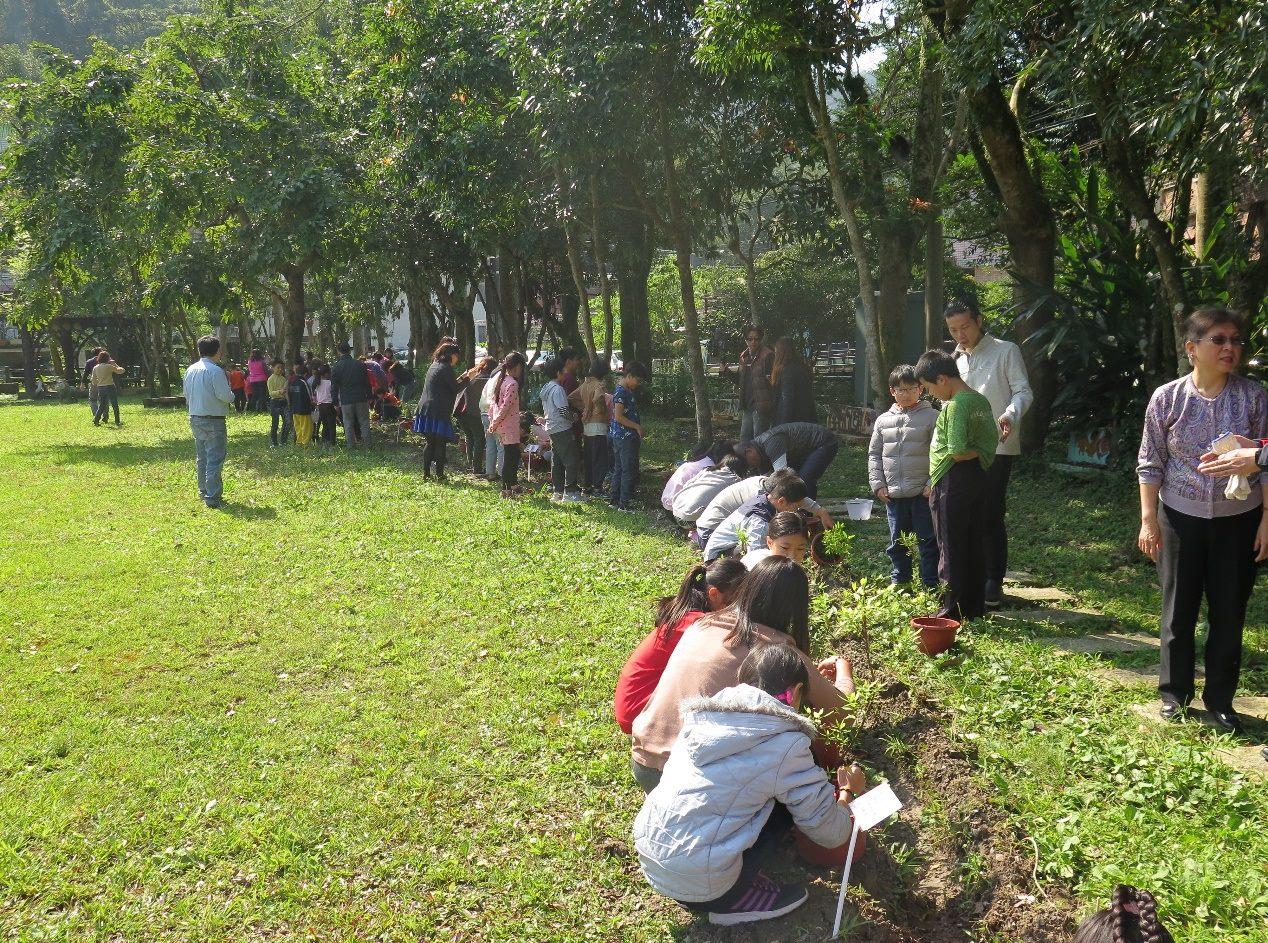 圖說:龜山國小師生協力種植整排烏來杜鵑幼苗。