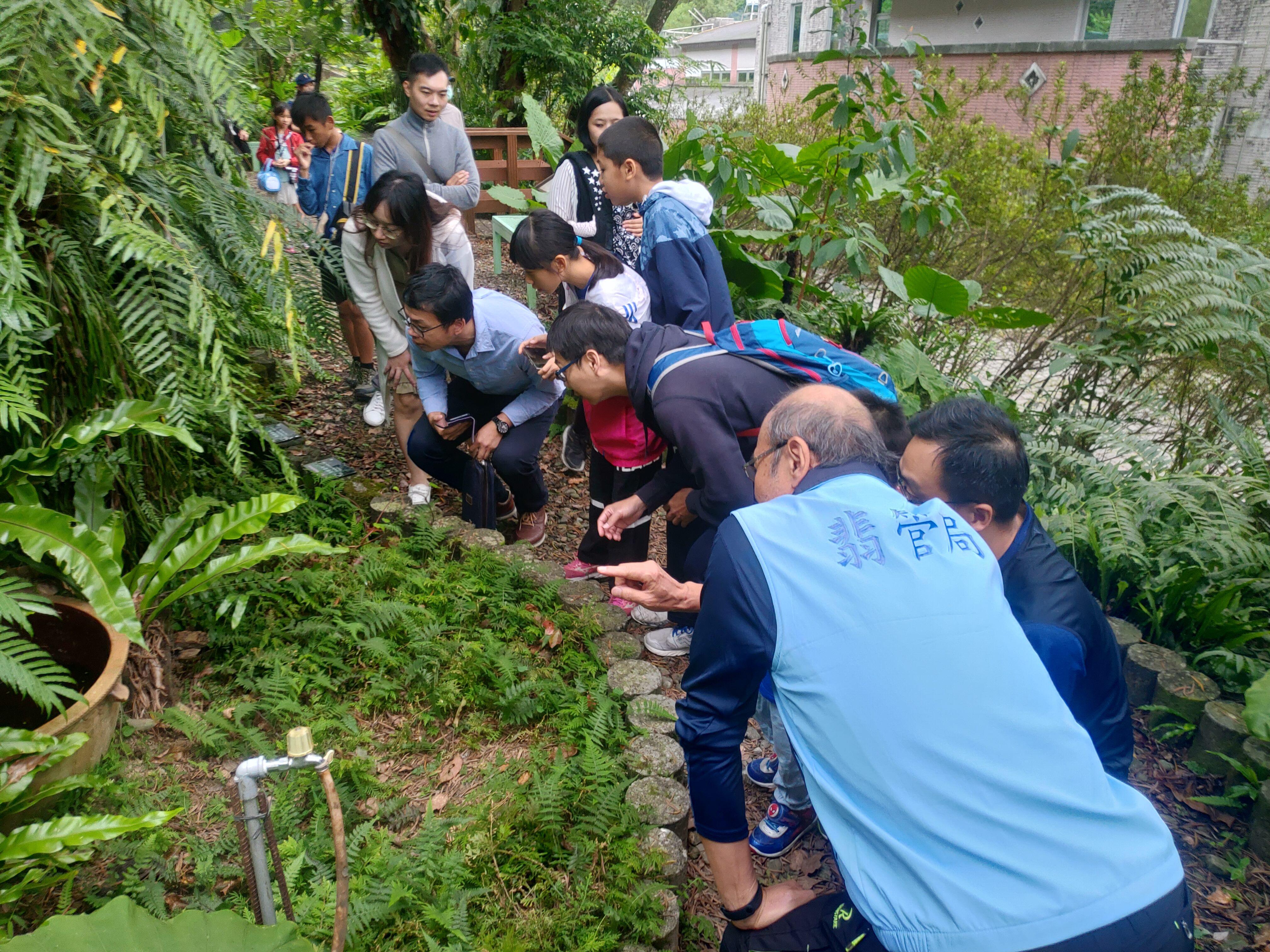 圖片說明:志工老師於蕨園為民眾介紹翡翠樹蛙