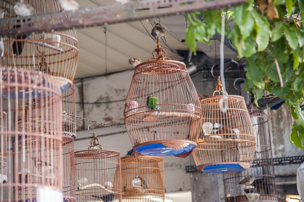 和平西路鳥鋪聚集區圖片4