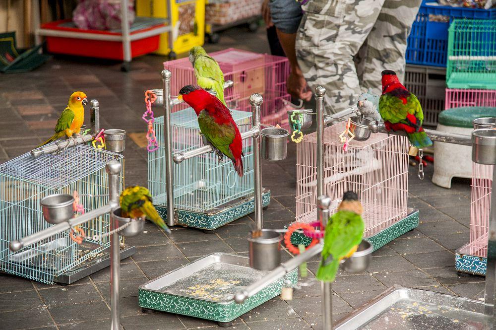和平西路鳥鋪聚集區圖片3