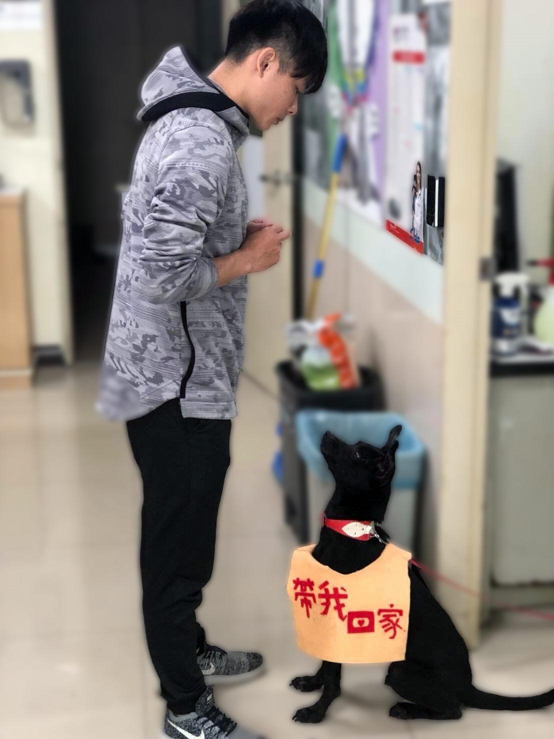 訓練師教導犬隻基本服從及與人互動
