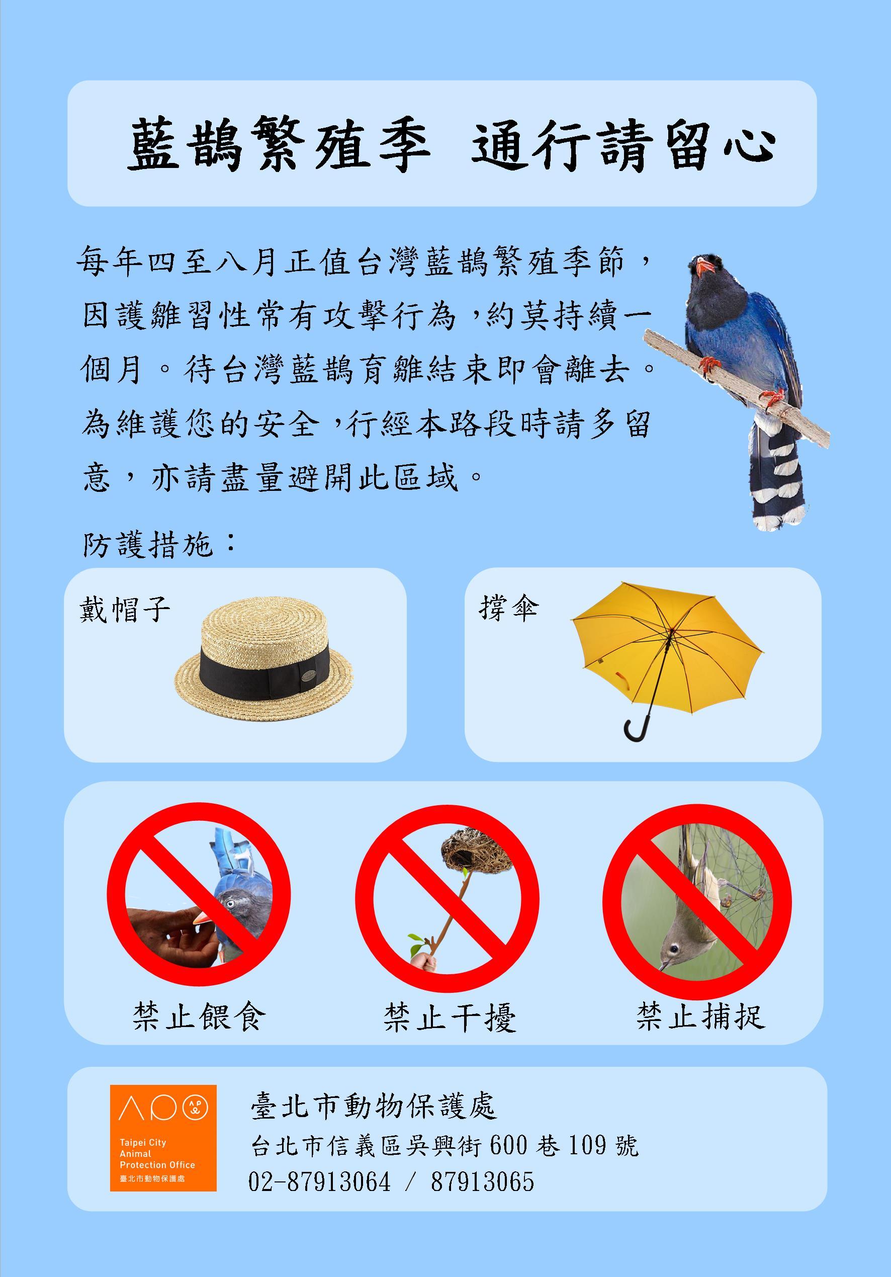 「藍鵲繁殖季,通行請留心」宣導海報