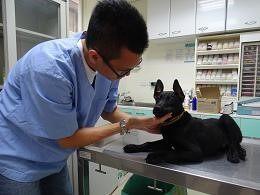 狗狗健康檢查