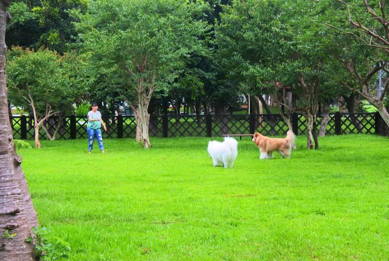 圖3 .歡迎飼主與狗狗到至善公園(福林)狗狗活動區遊玩
