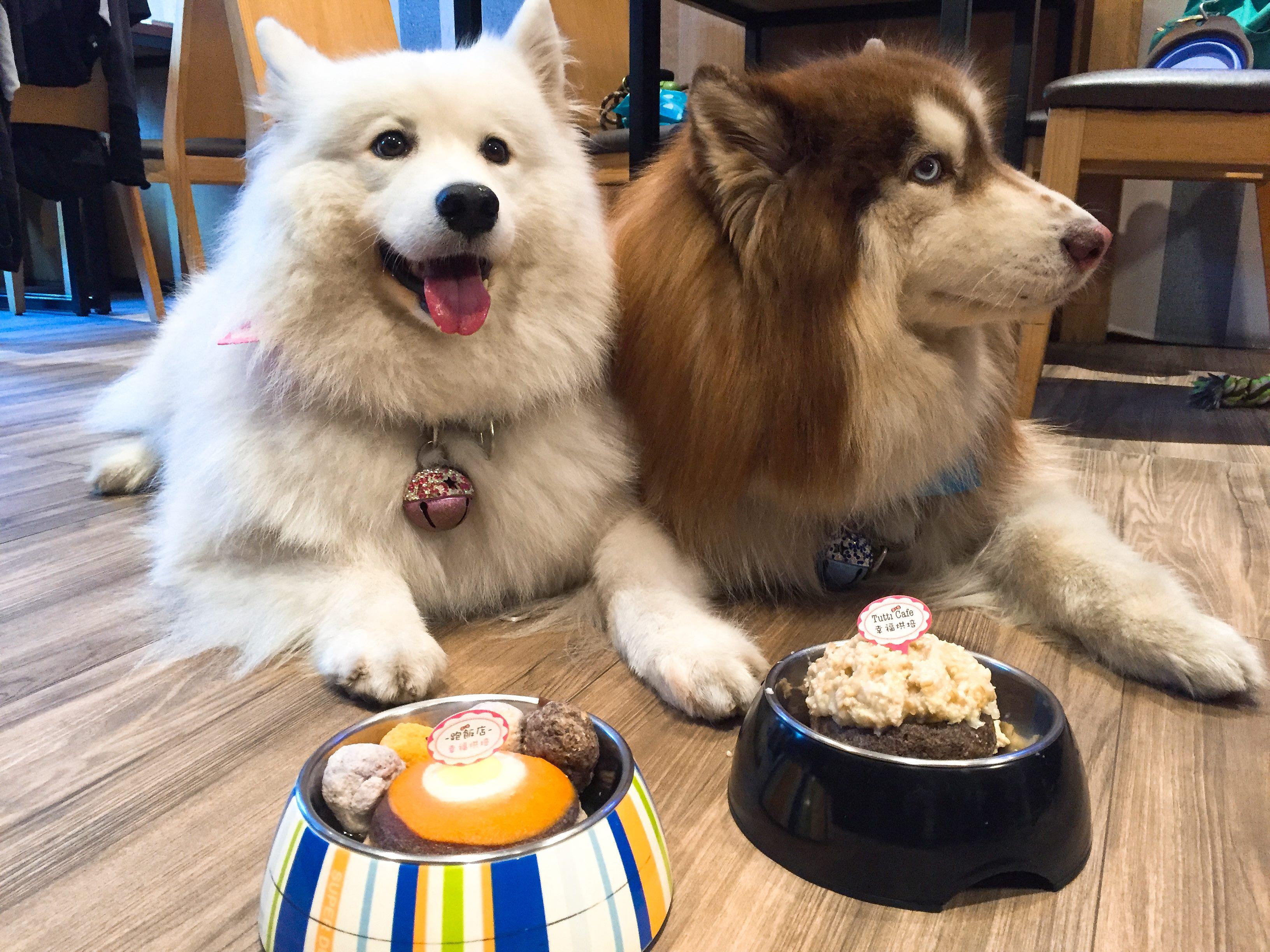 圖1 部份「動物友善空間」業者也提供精緻的寵物餐服務