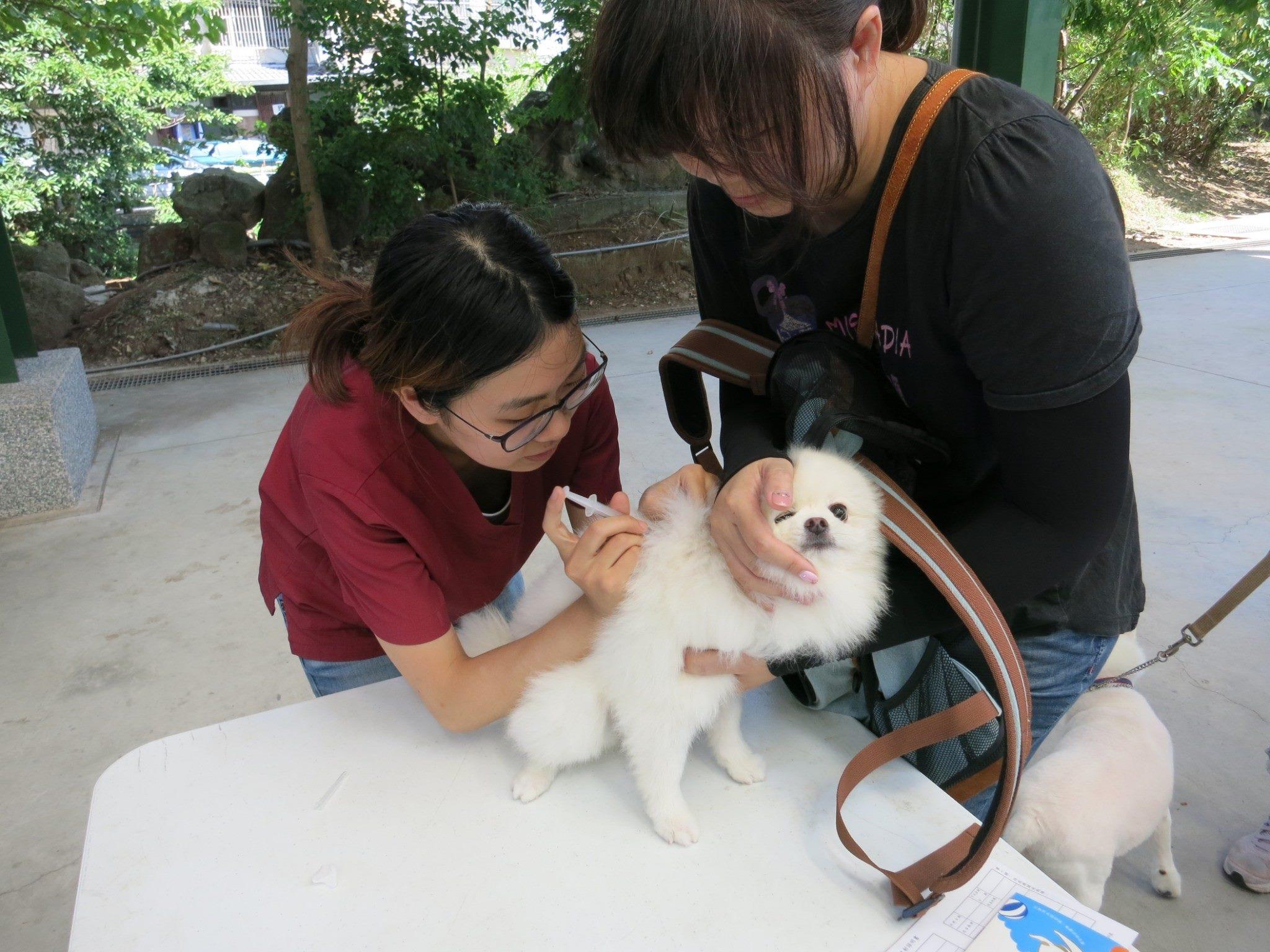 北市動保處北投區中心里狂犬病巡迴注射活動照片