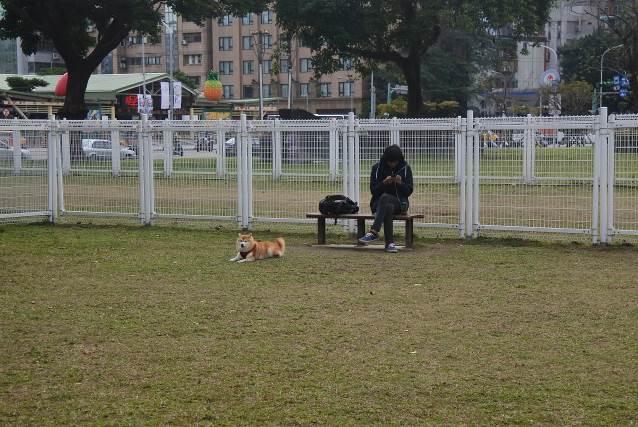 華山公園狗活動區內側