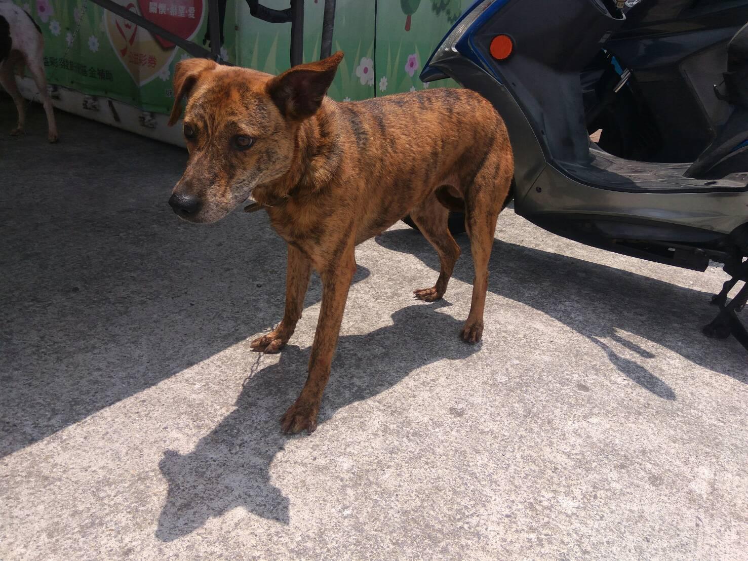 照片3.臺北市動物之家待認養犬隻