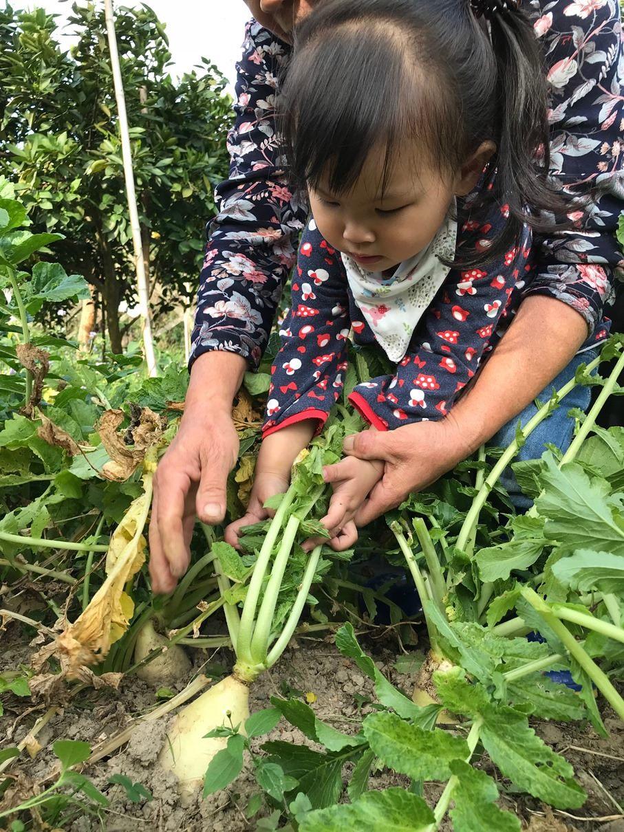 拔呀拔蘿蔔,讓孩子在農園中學習身體大小肌群的運用