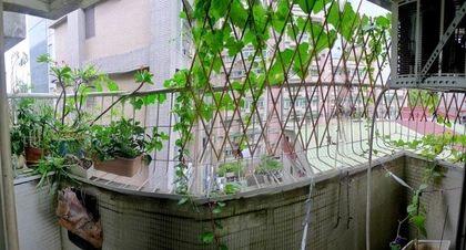 外牆種植物,隔熱又美觀。