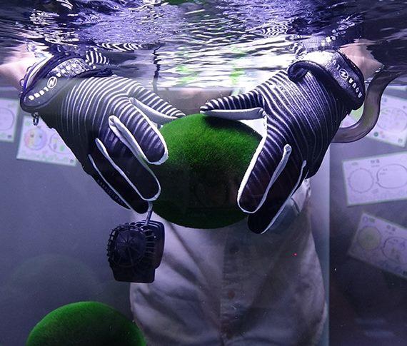 毬藻照養「開箱文」 水質控管加SPA