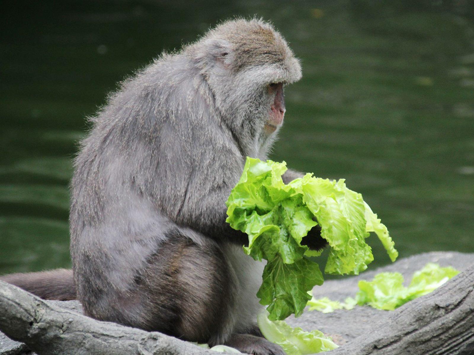 中秋柚子不爆食 減果増菜健康吃