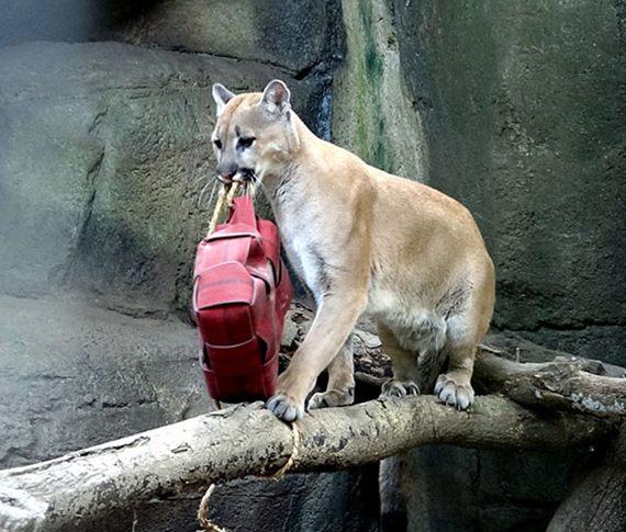動物園七夕情人節新啟發~實習生妙懂「施比受更有福!」