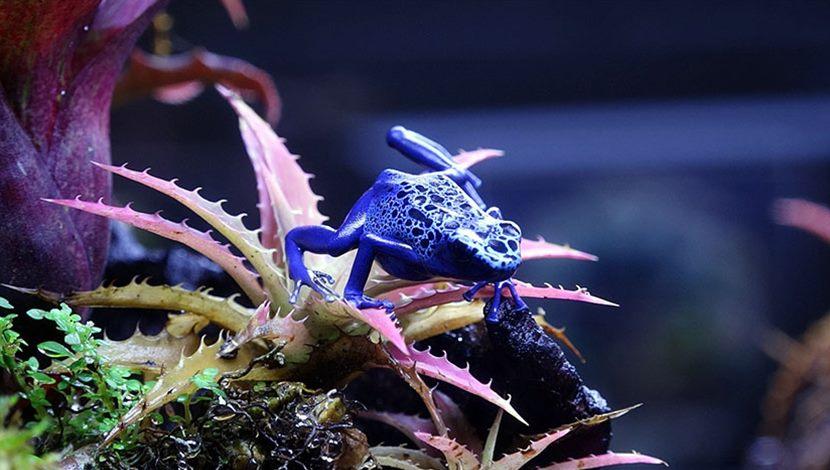 保育員當「蛙爸」傾全力付出〜臺北動物園「蛙房」愛心滿溢