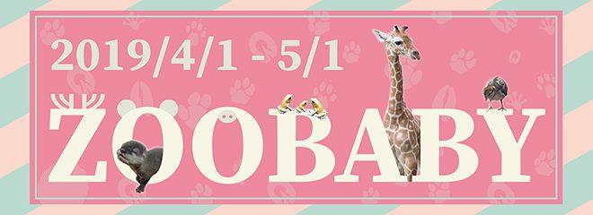 2019 ZooBaby Online 闖關活動