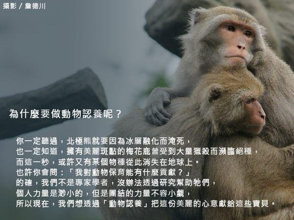 為什麼要做動物認養?透過動物認養,集結大眾力量,你我都能對動物保育有所貢獻。