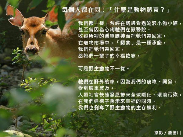 什麼是動物認養?動物認養是一種承諾,給他們一輩子的幸福依靠。