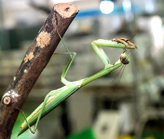 動物園昆蟲解籤-生態占卜好好玩