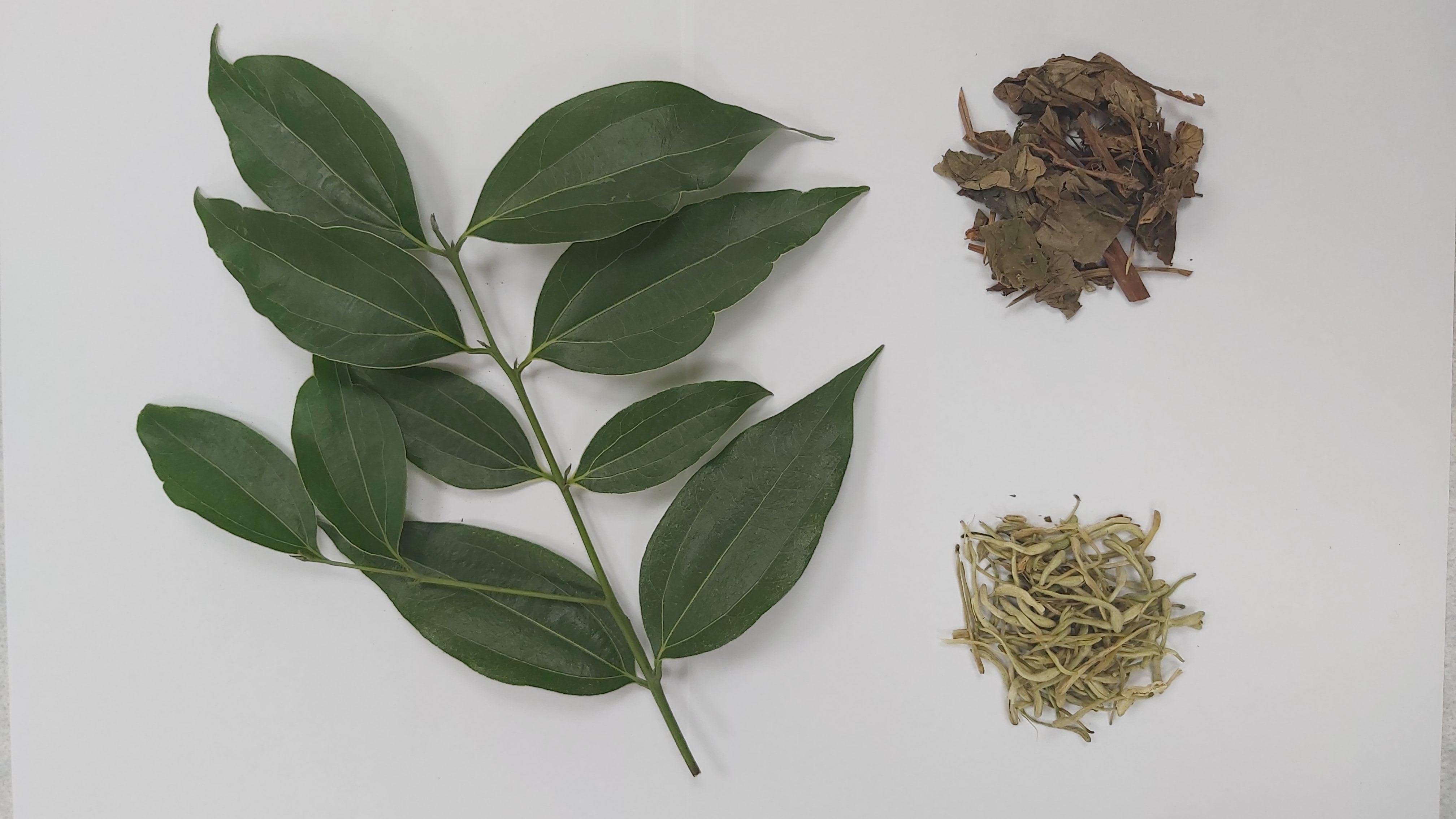 土肉桂葉(左)、魚腥草(右上)、金銀花(右下)