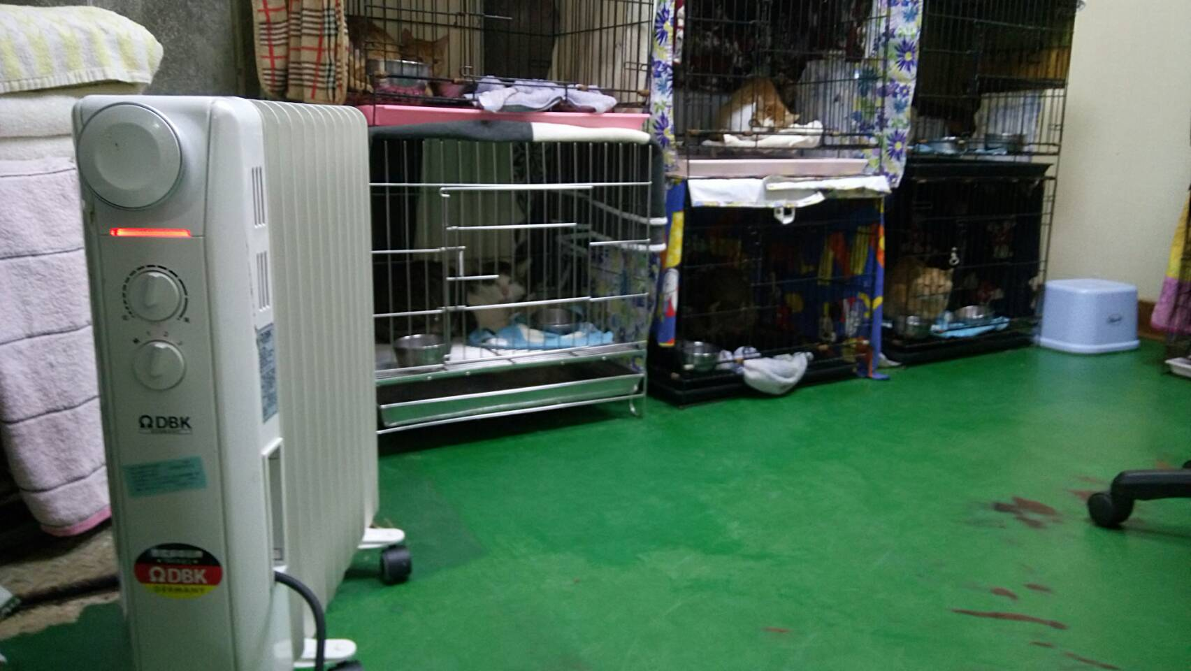 A heater warming the cats and dogs at the animal shelter
