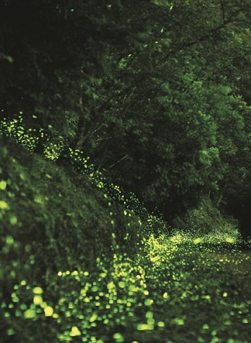 Through the success of firefly repopulation efforts, Taipei City successfully won the bid to host the International Firefly Symposium 2017.