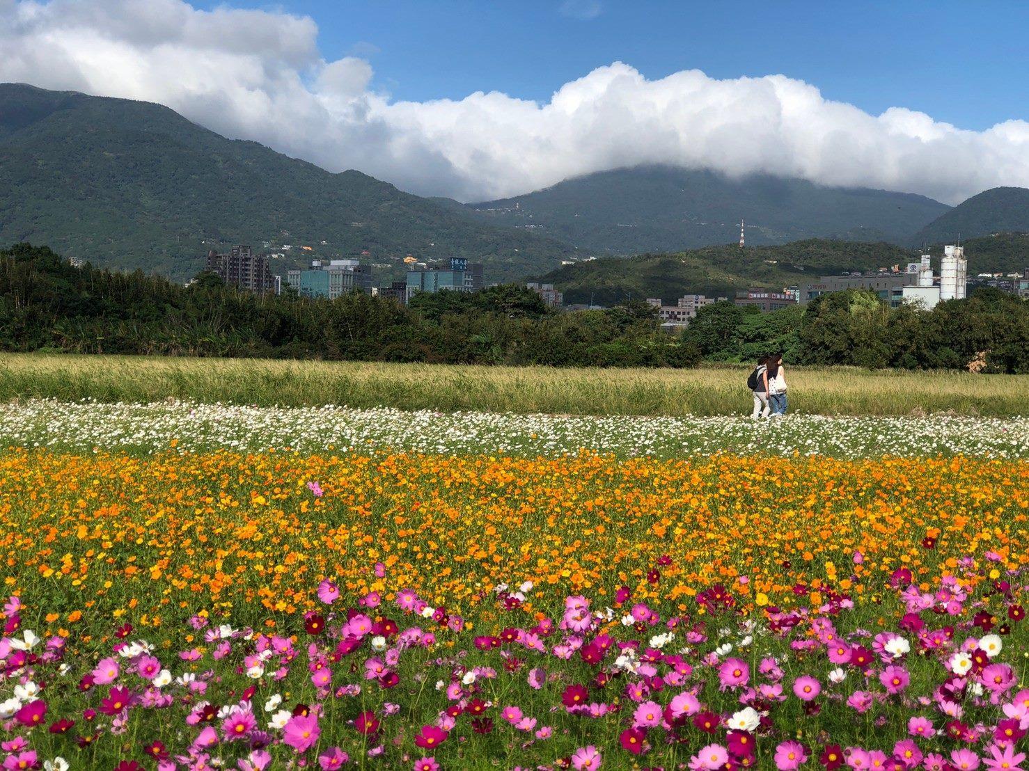 Guandu Sea of Flowers Showcase to Kick-off in Novemeber