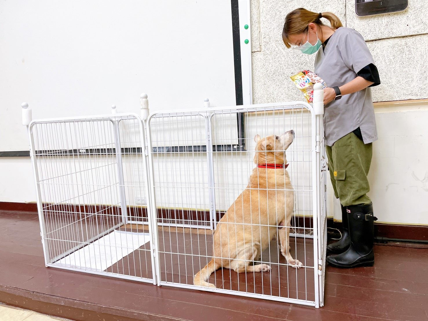 A pet dog being trained