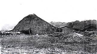 紫藤廬外觀1764-1908年間:台灣各地的私人糖廍種蔗製糖景觀