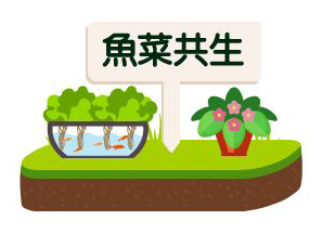 綠屋頂的魚菜共生