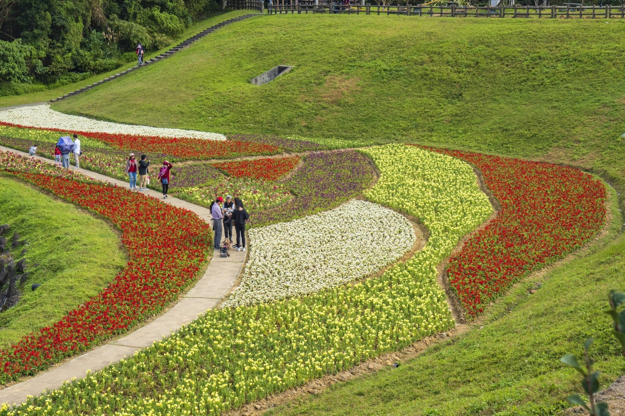 這裡使用近5萬盆當季草花